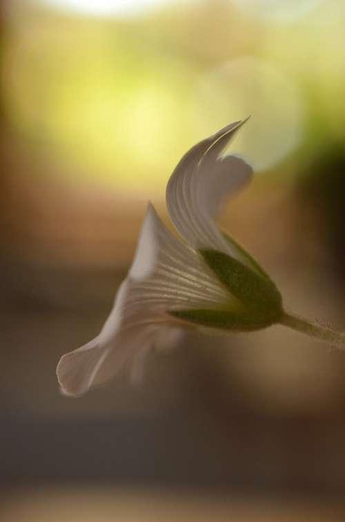 Flower White Summer