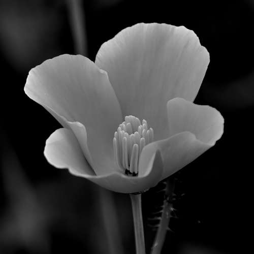 Flower Black And White White Black Floral Nature