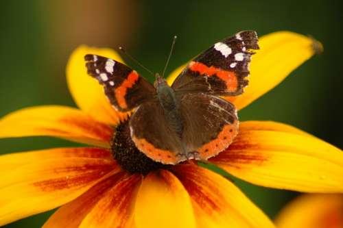 Flower Butterfly Plant Yellow Wings