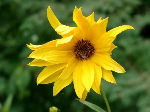 Blossom Bloom Garden Yellow Summer Flower