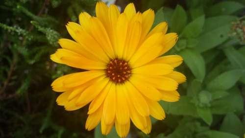 Flower Blossom Bloom Yellow Summer