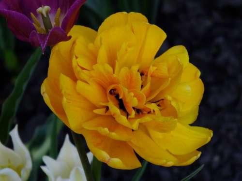 Flower Yellow Closeup Bright Garden Summer