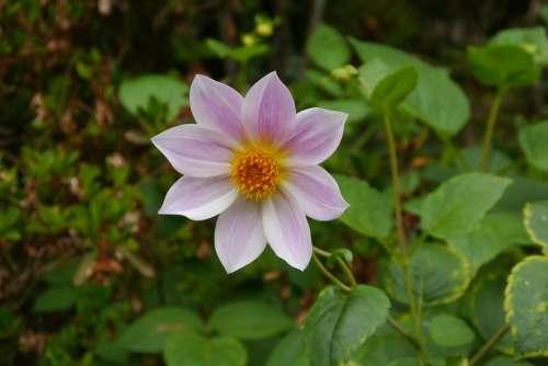 Flower Blossom Bloom Flora Nature Close Up