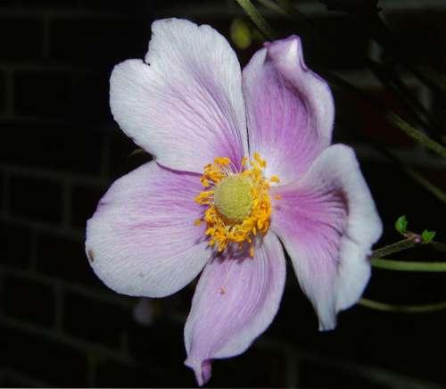 Flower Blossom Bloom Close Up Flower Garden Sweet