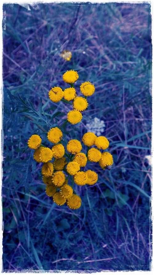 Flower Blue Yellow Contrast Flowers