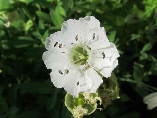 Flower White Nature