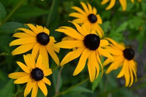 Flower Yellow Nature Garden Flowers Bed