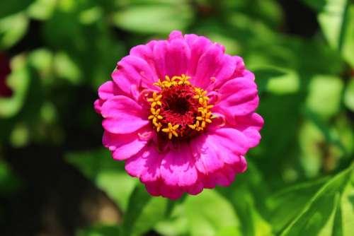 Flower Nature Pink Garden