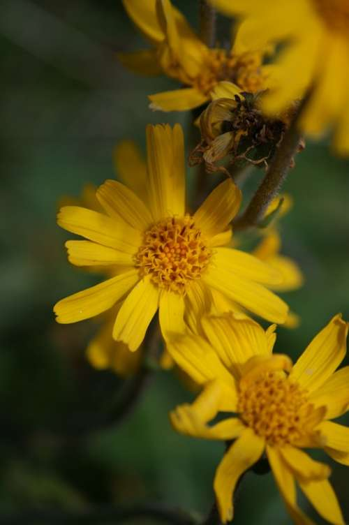 Flower Yellow Nature Plant Summer