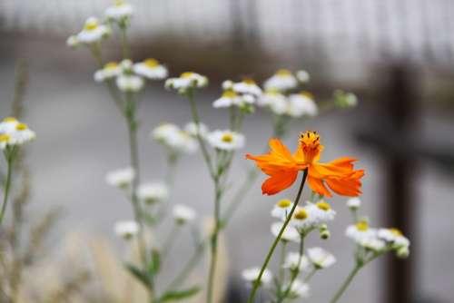 Flower Orange White Beautiful City Park Garden