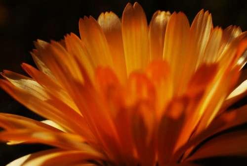 Flower Light Macro Orange Petals Spring Blossomed