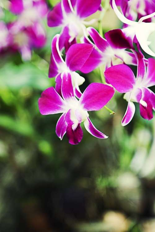 Flower Orchid Violet Leaves Beautiful Nature