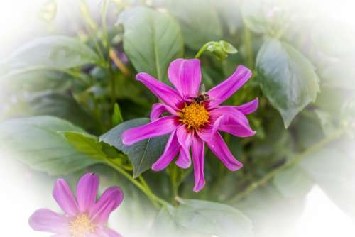 Flower Insect Pink Nature Beautiful Flora Color