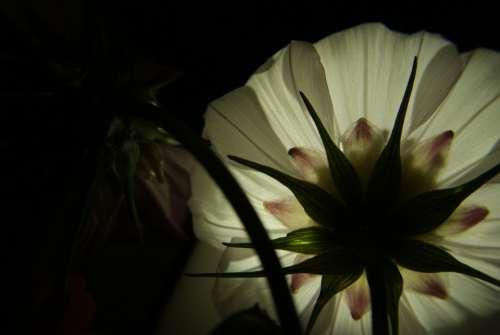 Flower White Light Petal Contrast