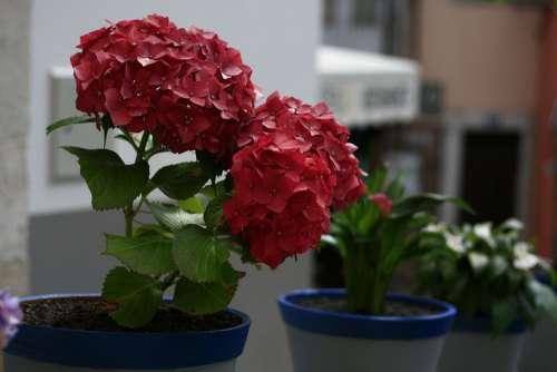 Flower Red Floral Plant Blossom Petal Bloom