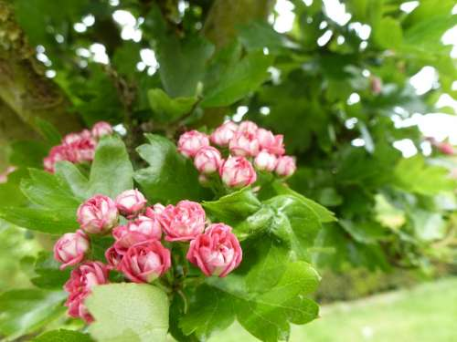 Blossom Bloom Nature Garden Plant Pink Tree