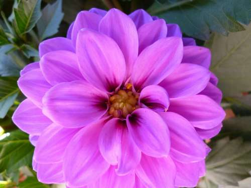 Flower Blossom Bloom Purple