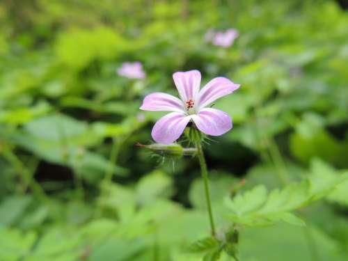 Blossom Bloom Flower Plant Purple Nature Macro