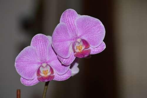 Flower Color Plant Leaves Nature Camera Nikon