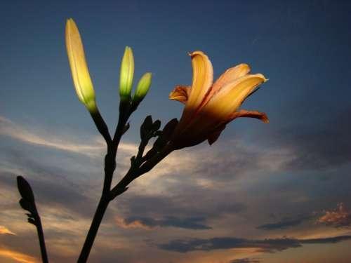Flower Light Cloud Light And Shadow