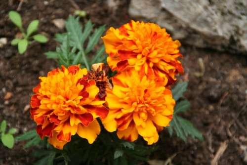 Flower Garden Flora