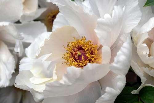 Flower Flowers Pollen Petals Bloom Blooming Macro