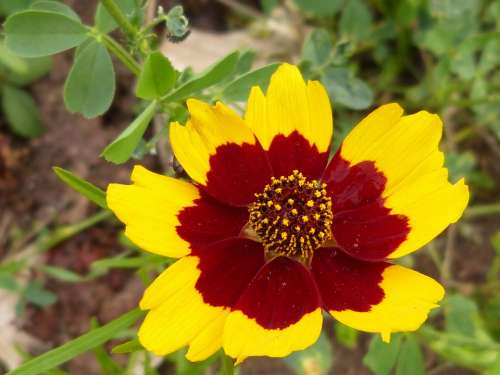 Flower Blossom Bloom Yellow Red Nature Plant