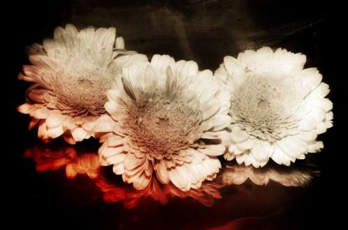Flower Composing Ancient Background Digital Artwork