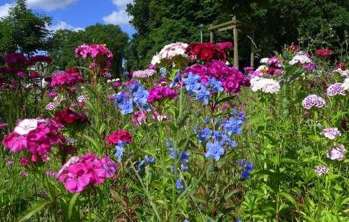 Flower Meadow Summer Summer Flowers Blue Violet