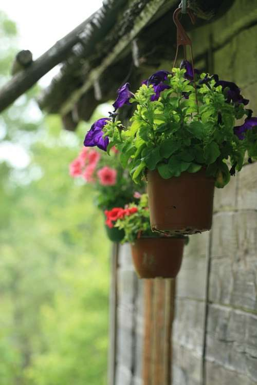 Flower Pot Potted Plant Flowers Hanging Outdoors