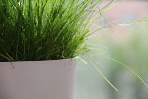 Flowerpot Green Lush Nature Lawn