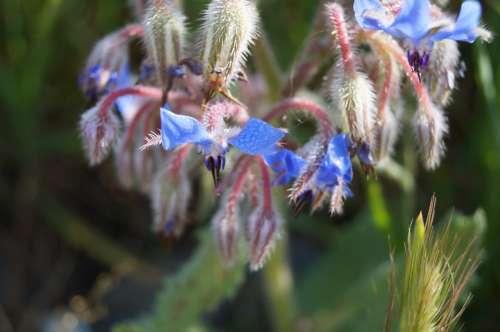 Flowers Blue Blossom Bloom Purple Pointed Flower