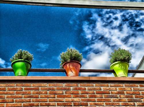 Flowers Plants Flower Pots Building Ledge Sky