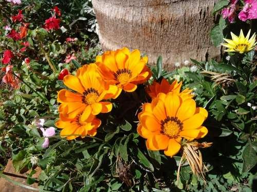 Flowers Yellow Garden