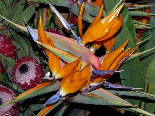 Flowers Plant Arrangement Flora Floristisch