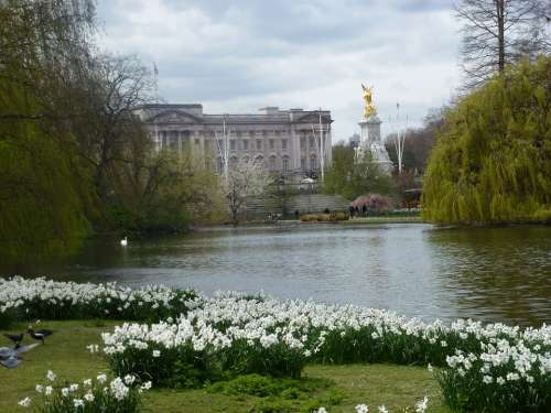 Flowers London Park England Britain Travel