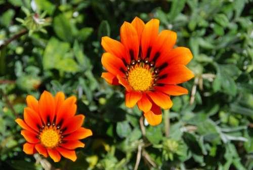 Flowers Flower Nature Beauty Beautiful Outdoor