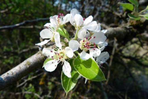 Flowers Nature Macro Spring Flowering Blossomed