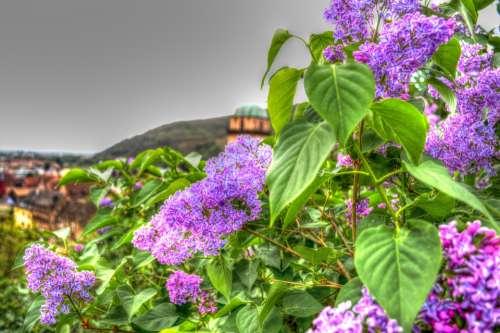 Flowers Plant Nature Violet Flower Landscape