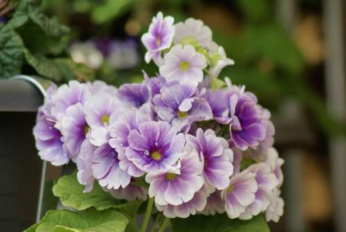 Flowers Spring Purple