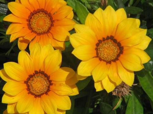 Flowers Nature Plant Flowering Vegetation