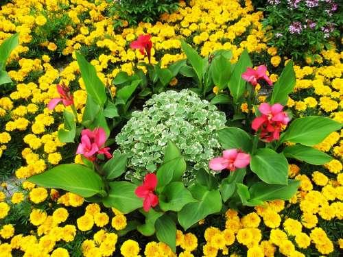Flowers Flower Bed Bright Beautiful Flora Garden