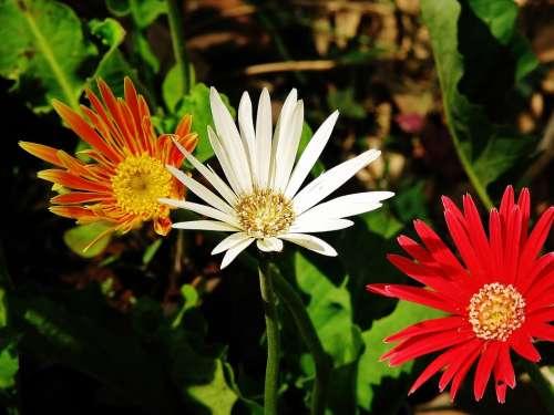 Flowers Orange Red Blossom