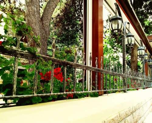 Flowers Window Geranium Terrace Street Lights