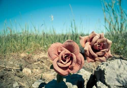Flowers Road Sky Dirt Grass Dust Sun Roses