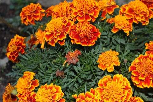 Flowers Nature Bloom Orange
