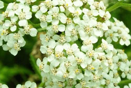 Flowers Fields White Prairie Macro Green Petals