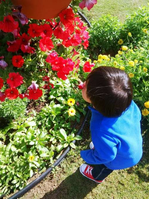 Flowers Boy Park Kid Nature Happy Child Outdoor