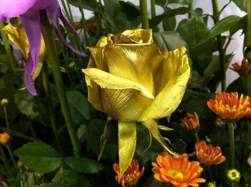 Flowers Rose Gold Gold Rose
