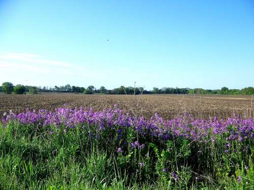 Flowers Country Rural Field Plowed